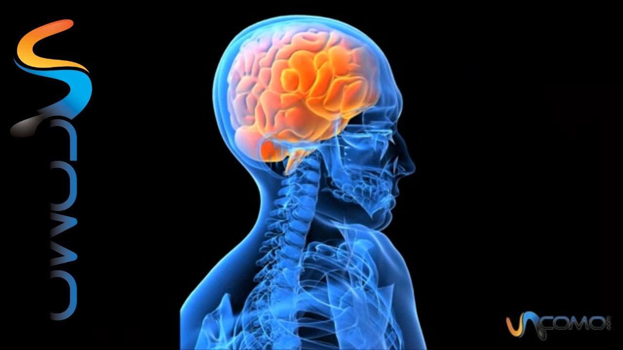 Cómo funciona el cerebro - YouTube