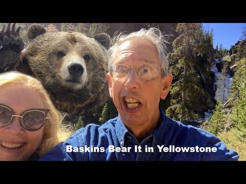Baskins Bear It In Yellowstone