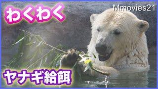 こんなに楽しめるヤナギの枝♪ホッキョクグマ親子三者三様 Polar Bears Life