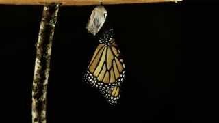 Heavenization Video Blog Series - Keys to Transformation