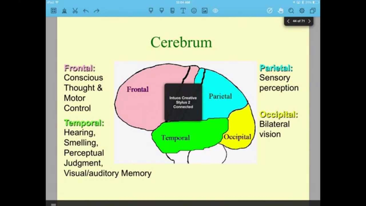 Lesson 41 - Parts of the Brain & Limbic System - YouTube Limbic System Add