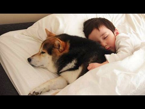 dog-protecting-baby-compilation-new