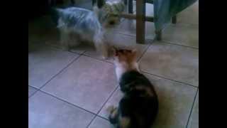 Jak Pies z Kotem ( Zuzia i Róża )