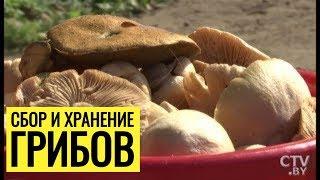 Почему не стоит замораживать грибы? Как собирать и хранить грибы?
