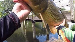 INSANE Topwater Carp Fishing at Rehoboth Beach, DE 9/13/15