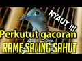 Perkutut Lokal Gacor Rame Saling Bersahutan Cocok Untuk Masteran Yang Malas  Mp3 - Mp4 Download