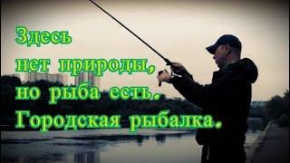 Здесь нет природы, но рыба есть. Городская рыбалка на фидер. Как влияет течение на клёв плотвы