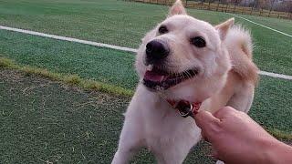 구속되어 사는 개들을 대변하는 자유의 상징 공장 진돗개…