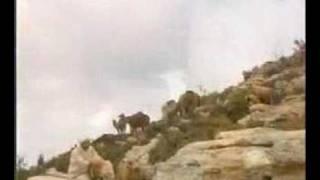 Müziksiz ilahiler 12 - Yemen illerinde Veysel Karani