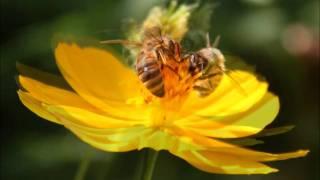 Flight of the bumble bee - Nigel Kennedy