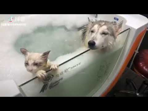 Cat Series: When a dog and a cat are taking bath together