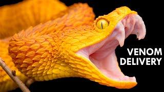 how-venom-destroys-your-insides