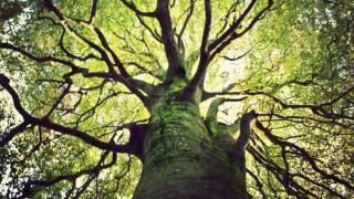 【靜心冥想練習】15分鐘 接地導引冥想 Grounding Meditation