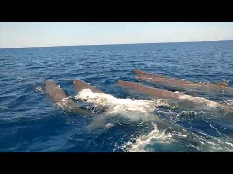 Whale Watching in the Mediterranean