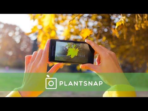 PlantSnap: Identify Plants with an App
