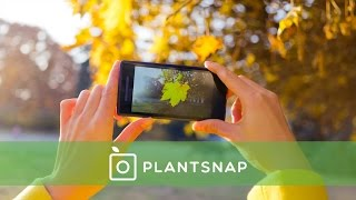 PlantSnap: Identify Plants with an App
