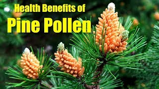 HEALTH BENEFITS OF PINE POLLEN