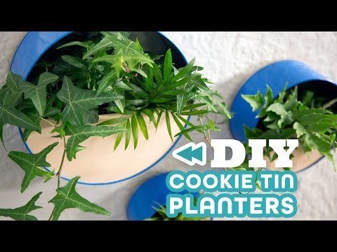 Turn Old Cookie Tins Into Wall Planters - HGTV Handmade