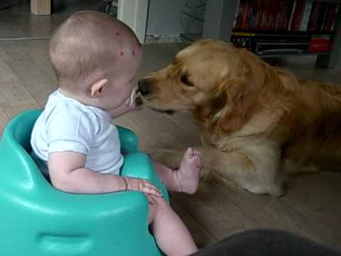 Golden retriever & baby.. Best friends - YouTube Golden Retriever And Baby
