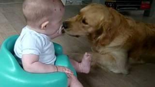 Golden retriever & baby..  Best friends
