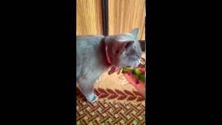 Коту нужны витамины