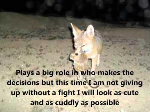 Paige's Giant Kangaroo Rat free verse poem Movie
