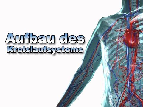 Aufbau und Funktion des Herz-Kreislauf-Systems (Film 1 BIOTRONIK ...