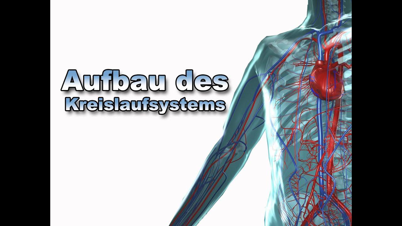 Wunderbar Anatomie Des Kreislaufsystems Bilder - Menschliche ...