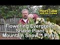 Mountain Snow™ Pieris - Flowering Evergreen Shade Plant