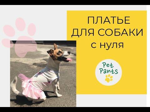 Как сшить для собаки платье