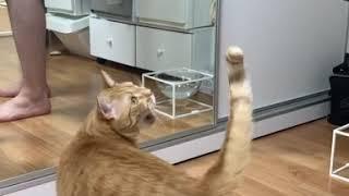 쭈왁쭈왁 늘어나는 치즈냥이 고양이 몽구의 고구마 먹기 …