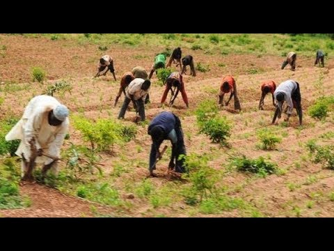 WATCH: How To Make Money As A Nigerian Farmer