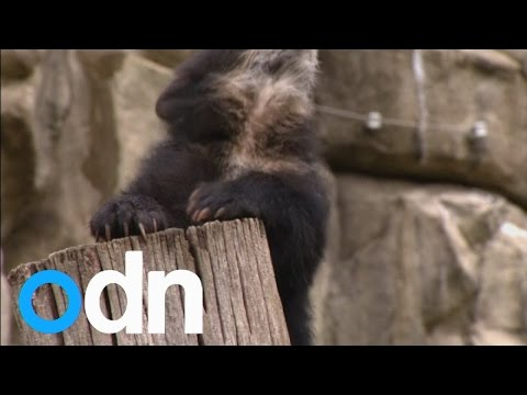 US National Zoo reveals the names of a cute bear cubs