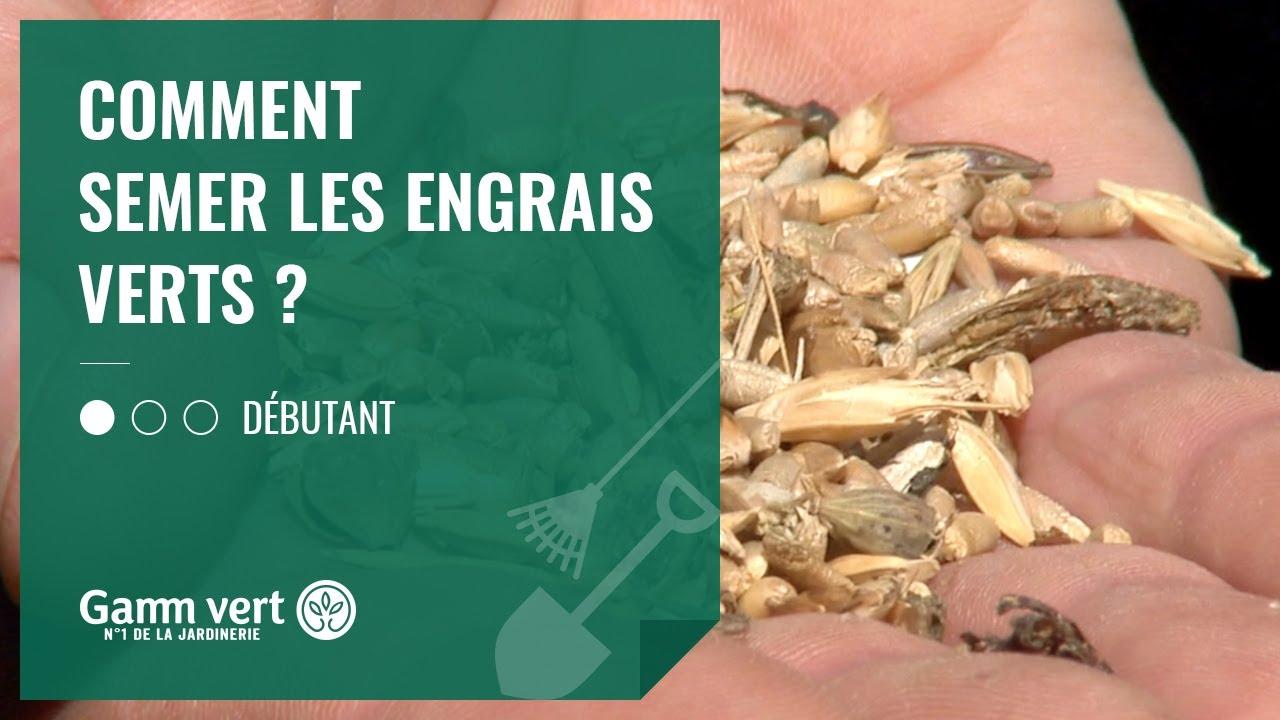 [TUTO] Comment semer les engrais verts ? – Jardinerie Gamm vert #1