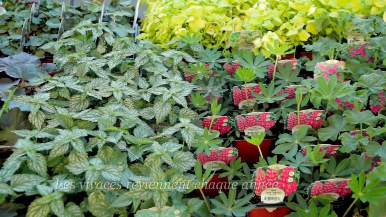 Capsule id es conseils agencer plantes et fleurs dans son for Plantes et fleurs de jardin