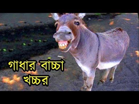 গাধার বাচ্চা খচ্চর দেখুন | Mule vs Hinny relation with Horse and Donkey | Funny Hybrid Animals