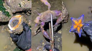 해안에서 위대하고 독하고 기이 한 해산물 잡기 64 회…
