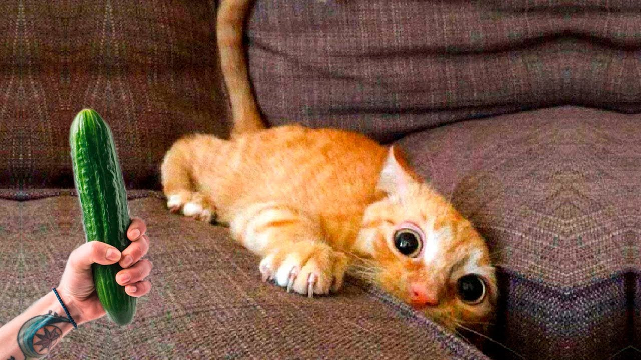 ПРИКОЛЫ С ЖИВОТНЫМИ 😺🐶 Смешные Животные Собаки Смешные Коты Приколы с котами Забавные Животные #89