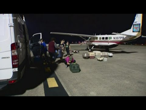 SA Dogs Travel To Find Families In Colorado