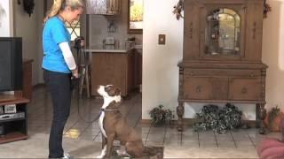 Train Your Dog To Speak