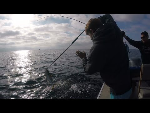 Offshore California: Yellowtail in the Boat!