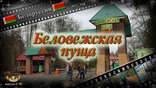 #36 Беловежская пуща (Беларусь)(Выпуск #36. Фрагмент из фильма -