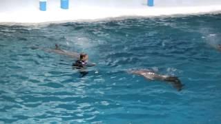 Москвариум 2015 ч 2 - дельфины