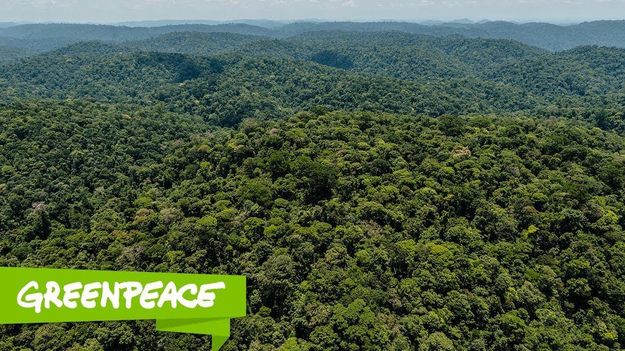 Eu sou a Amazônia