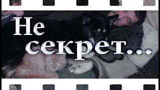 Видео о дружбе лайки Ночки и кота Рыжика))❤Слайд шоу из фотографий и музыки