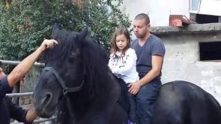 Memphis-the strongest horse in east Europe&Maria