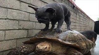 かわいい、面白、驚き、ブサカワ犬猫動画】 良かったら、チャンネル登録...