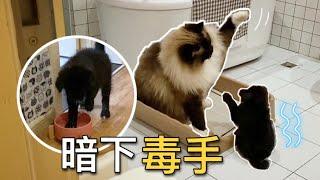 【李喜貓】小狗總被大貓欺負,半夜偷偷在貓水碗裏洗脚報復,看完笑噴