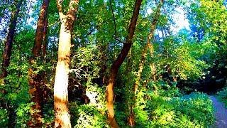 Футаж Лес. Красивый Лес Видео. Летний Лес. Русский Лес Летом. Зеленый Лес. Футажи для видеомонтажа