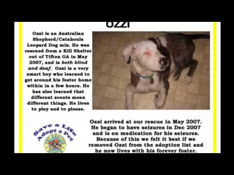 Pet Rescue North Special Needs Dogs